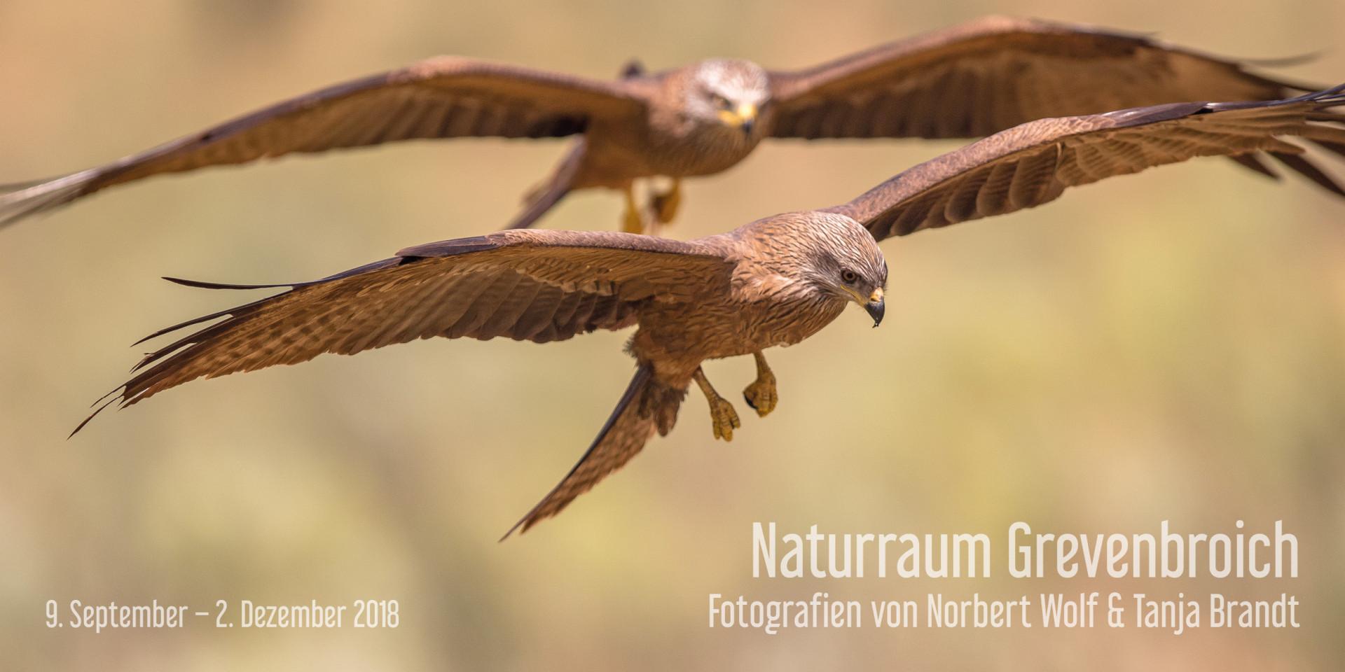 Ausstellung Naturraum Grevenbroich